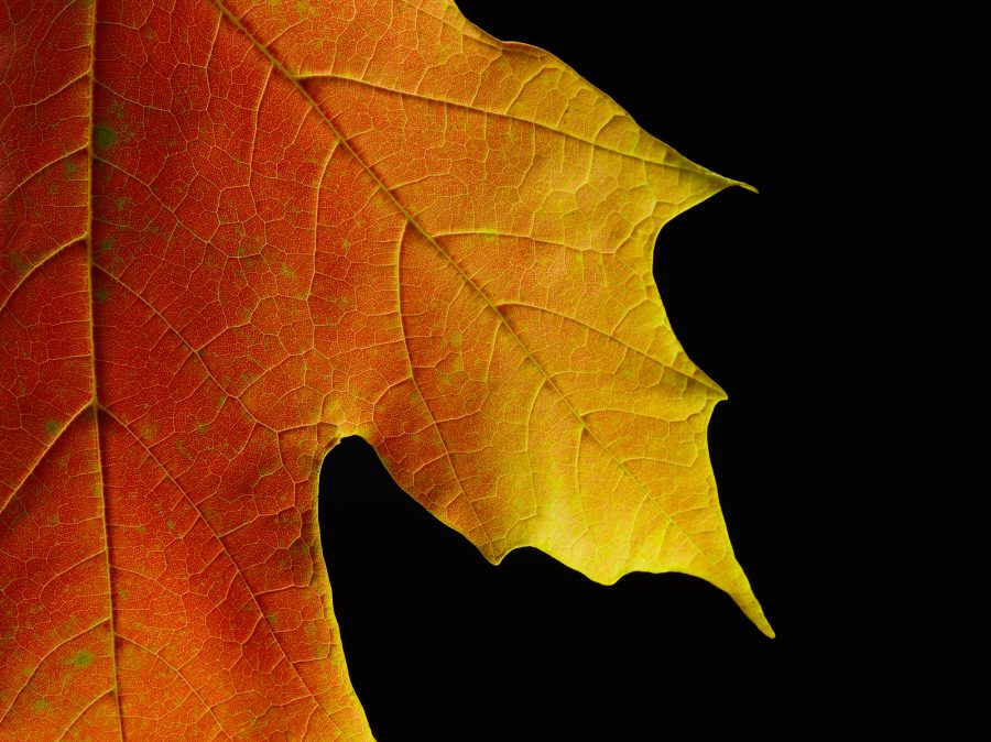 Fine Art macro Leaf photography
